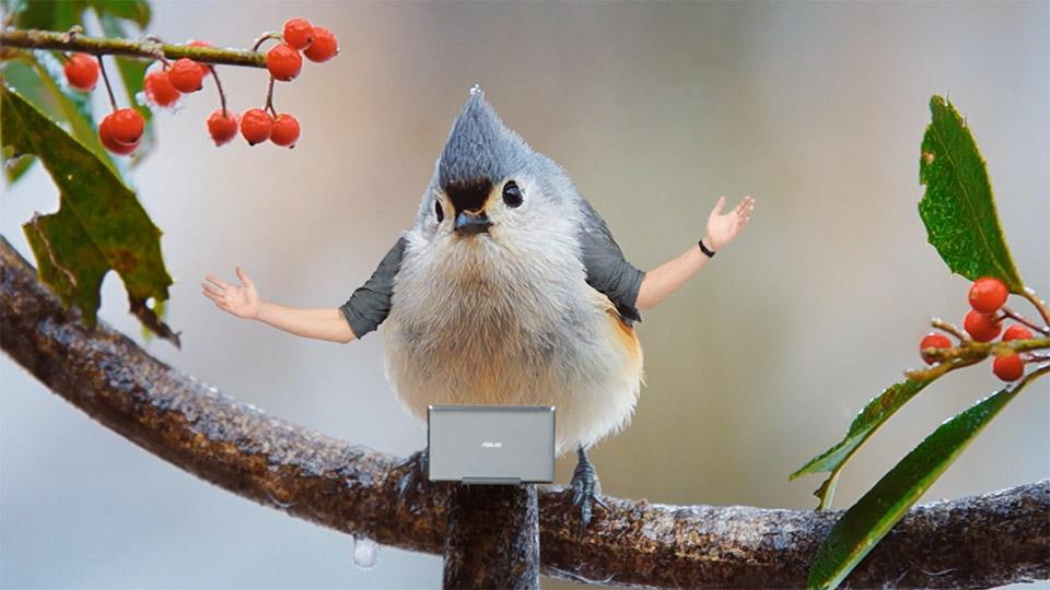 ASUS Birds